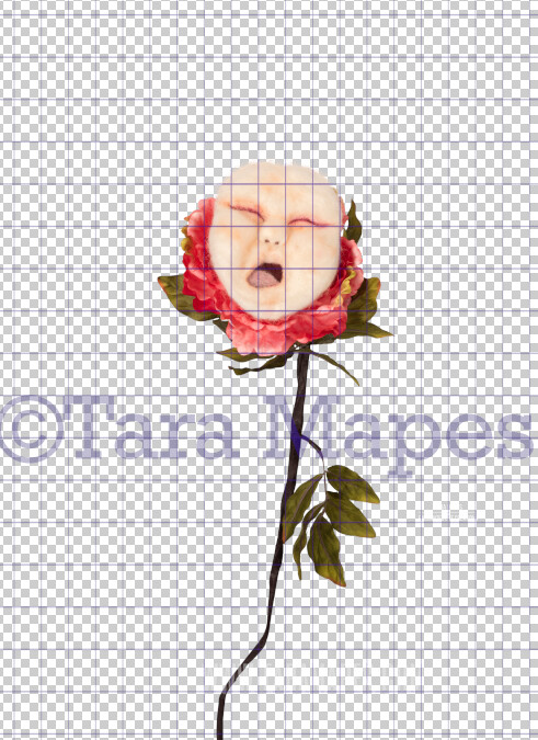Talking Flower-  Crying Baby Face Flower- Flower Overlay by Tara Mapes - Alice in Wonderland Inspired PNG - Digital Overlays by Tara Mapes Enchanted Eye Creations