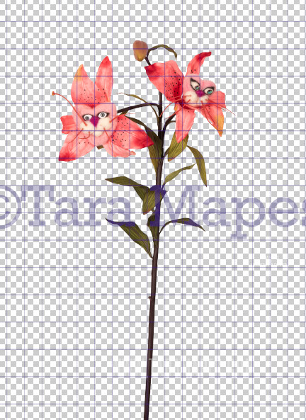 Talking Flower-  Tiger Lilies with Faces Flower- Flower Overlay by Tara Mapes - Alice in Wonderland Inspired PNG - Digital Overlays by Tara Mapes Enchanted Eye Creations