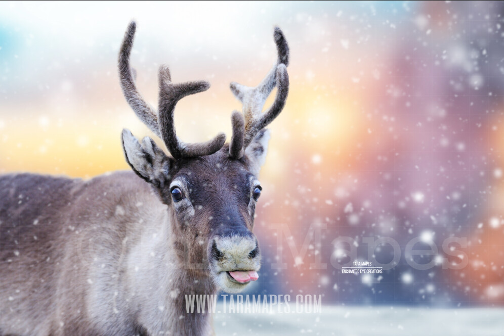 Funny Reindeer - Reindeer making funny face - reindeer sticking out tongue - Funny  - Christmas Holiday Digital JPG Background Backdrop