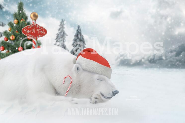 Christmas Polar Bear Digital Background - Polar Bear Nap In North Pole- Holiday Christmas Digital Background Backdrop