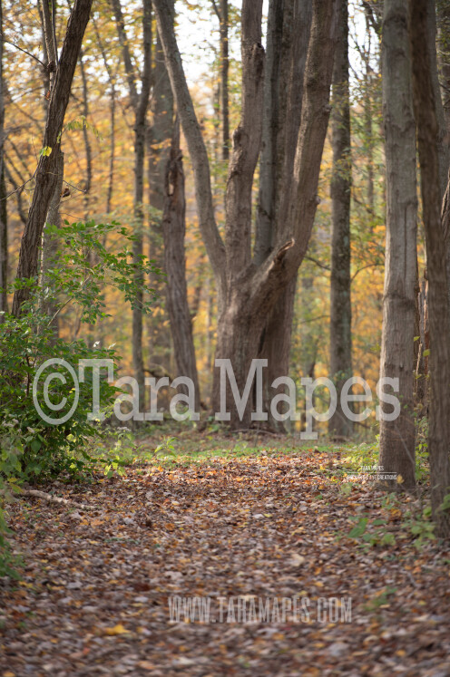 Forest Path in Autumn - Fall Path - Digital Background