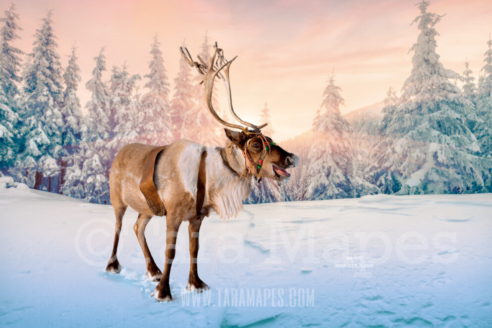 Smiling Reindeer in Snow  by Pine Trees - Snowy Scene with Reindeer - Christmas Holiday Digital Background Backdrop