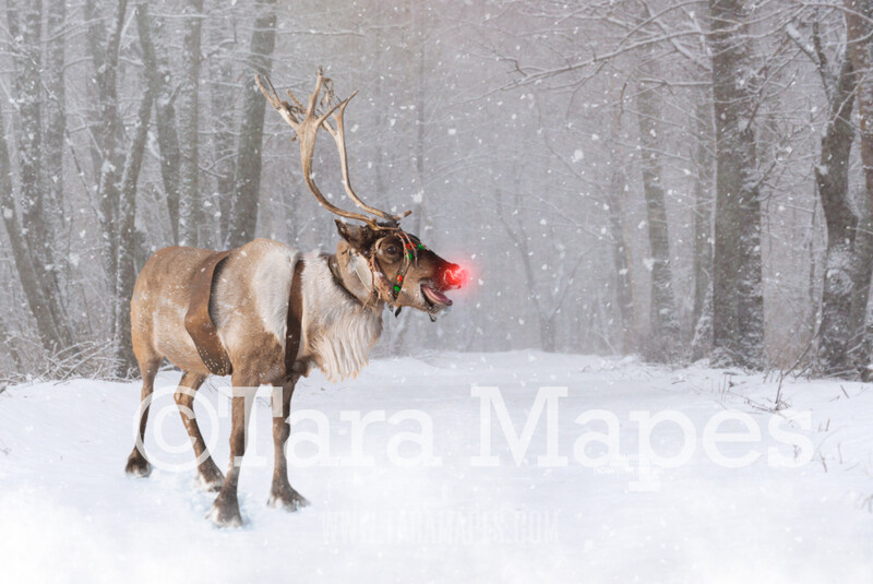 Smiling Reindeer in Snow by Pine Trees -Free SNow overlay - Snowy Scene with Reindeer - Christmas Holiday Digital Background Backdrop