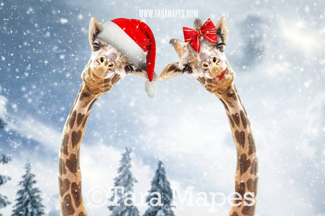 Christmas Giraffes in Snow by Pine Trees -Free Snow overlay - Snowy Scene with Giraffes - Christmas Holiday Digital Background Backdrop