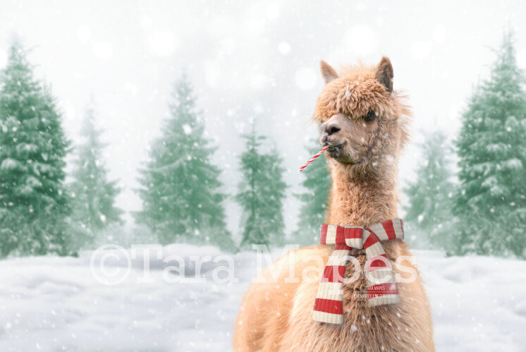 Funny Alpaca Llama in Snow by Pine Trees -Free Snow overlay - Snowy Scene with Animal- Christmas Holiday Digital Background Backdrop