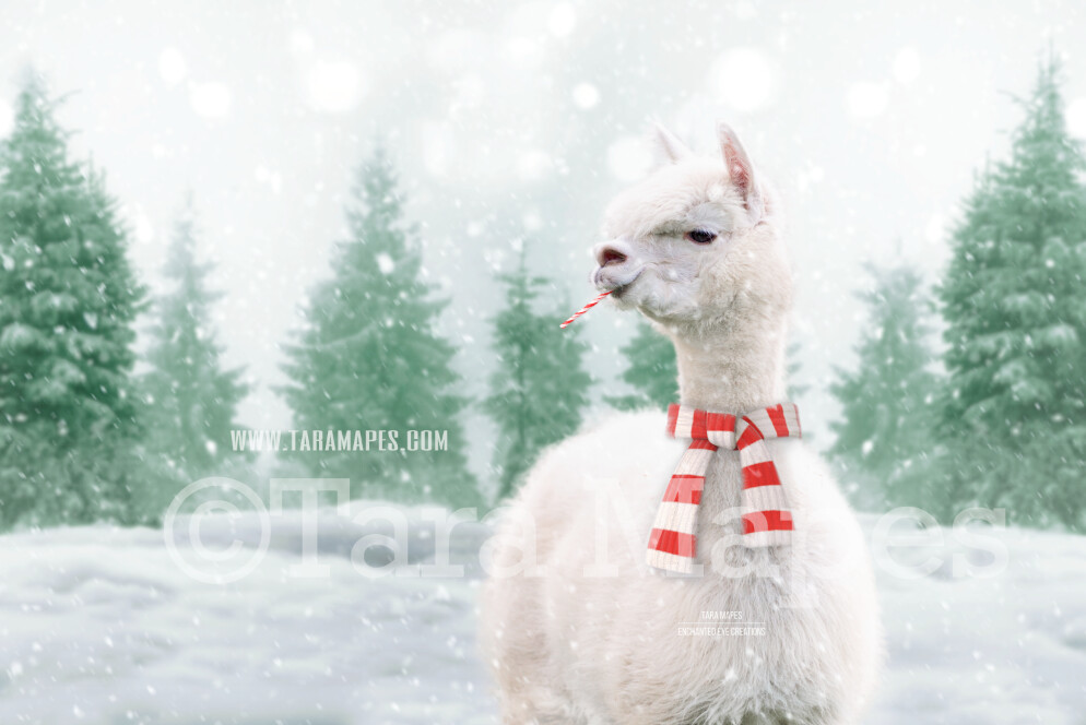 Funny Alpaca Llama in Snow by Pine Trees -Free Snow overlay - Snowy Scene with Animal - Christmas Holiday Digital Background Backdrop