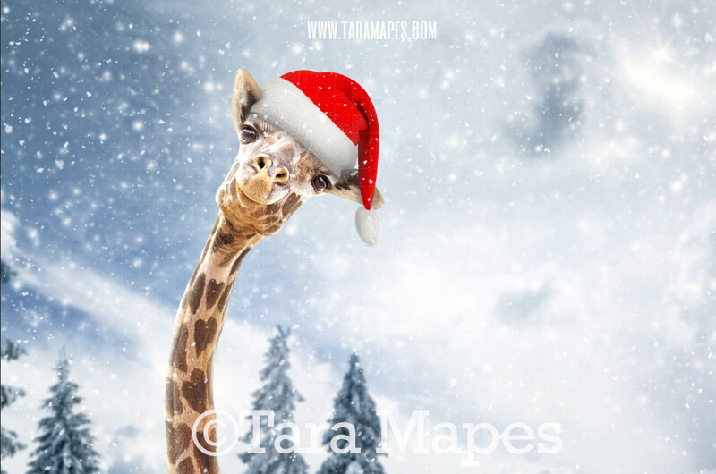 Christmas Giraffe in Snow by Pine Trees -Free Snow overlay - Snowy Scene with Giraffe - Christmas Holiday Digital Background Backdrop