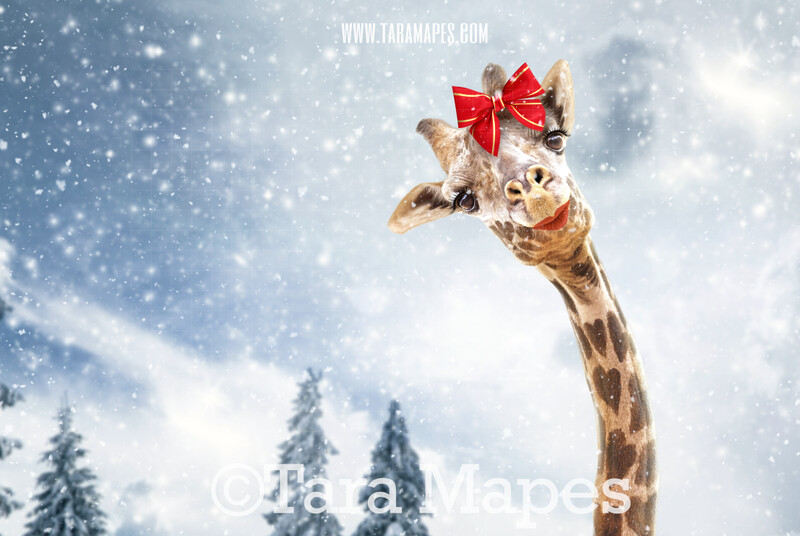 Christmas Giraffe in Snow by Pine Trees -Free Snow overlay - Snowy Scene with Giraffes - Christmas Holiday Digital Background Backdrop