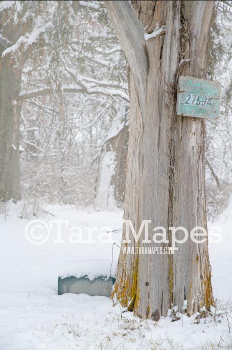 Frozen Tree  - Winter Scene- Snowy Scene Digital Background plus FREE SNOW OVERLAY