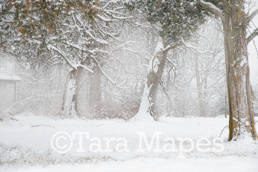 Frozen Trees 1 - Winter Scene- Snowy Scene Digital Background plus FREE SNOW OVERLAY