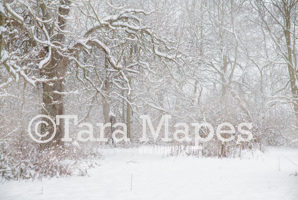 Frozen Trees 2 - Winter Scene- Snowy Scene Digital Background plus FREE SNOW OVERLAY