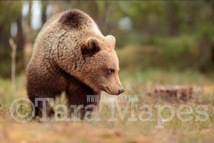 Bear in Forest in the Spring - Natural Digital Background Backdrop