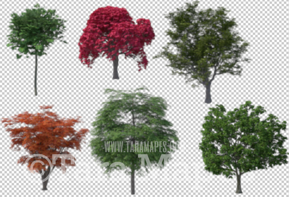 6 Blurred Tree Overlays - PNG file of Blurred Trees