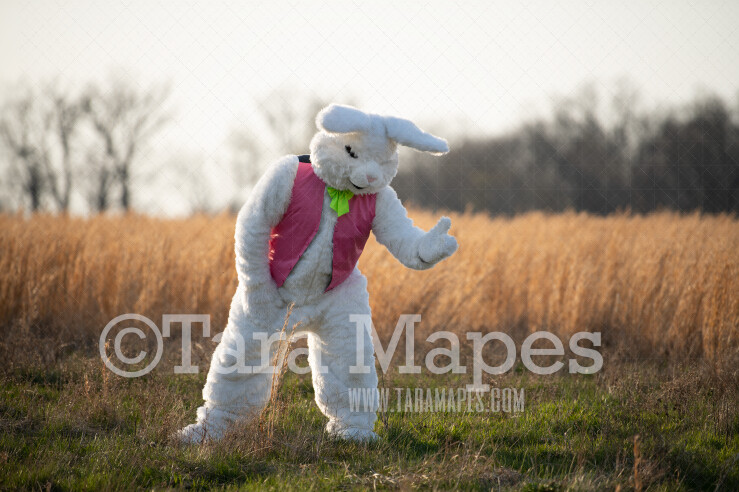 Easter Bunny in Golden Field - Easter Bunny Digital - Fun Easter Digital - JPG file - Photoshop Digital Background / Backdrop