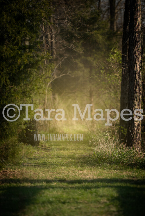 Glowing Forest Path - Spring Path in Woods with Glowing Sun - Sunset on Forest Path  - Digital Background by Tara Mapes