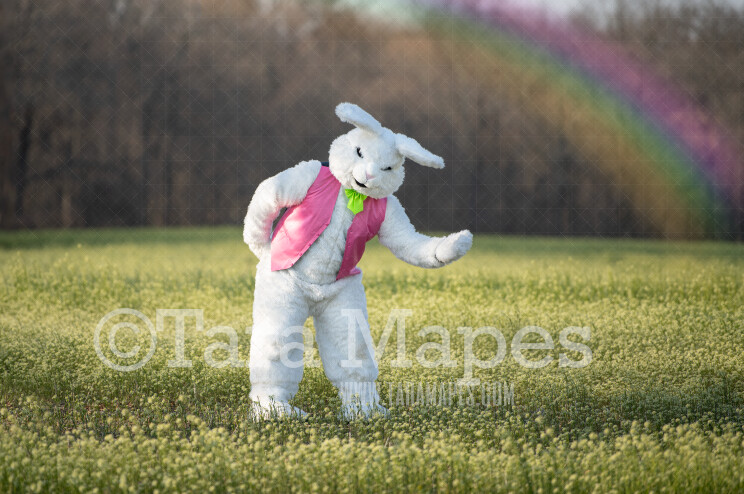 Easter Bunny in Field with Rainbow - Easter Bunny Digital - Fun Easter Digital - JPG file - Photoshop Digital Background / Backdrop
