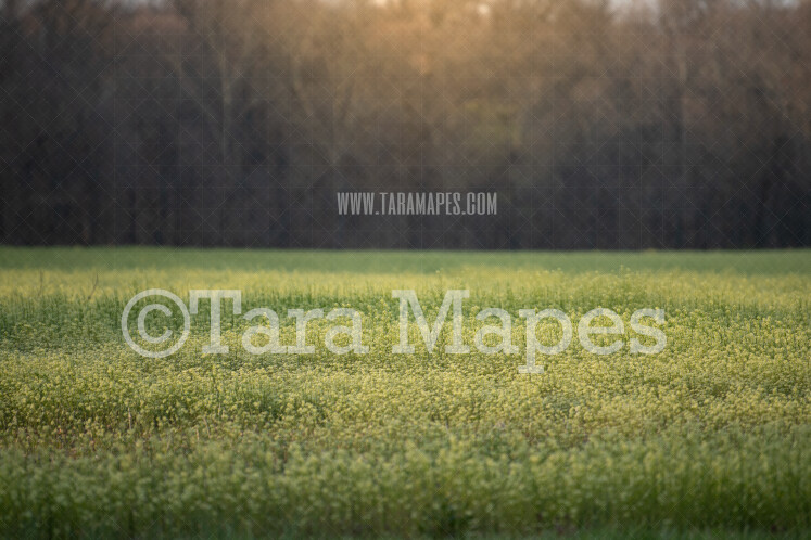 Field of Flowers with Glowing Sun - Creamy Bokeh Spring Digital Background by Tara Mapes