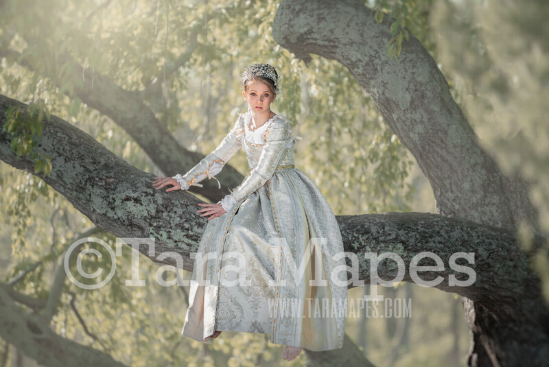 Sitting Tree- Whimsical Tree Branch- JPG file - Photoshop Digital Background / Backdrop