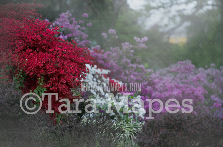 Castle Garden- Flowering Bushes - Purple White and Red Flowers - Soft Creamy Background - JPG file - Photoshop Digital Background /  Backdrop