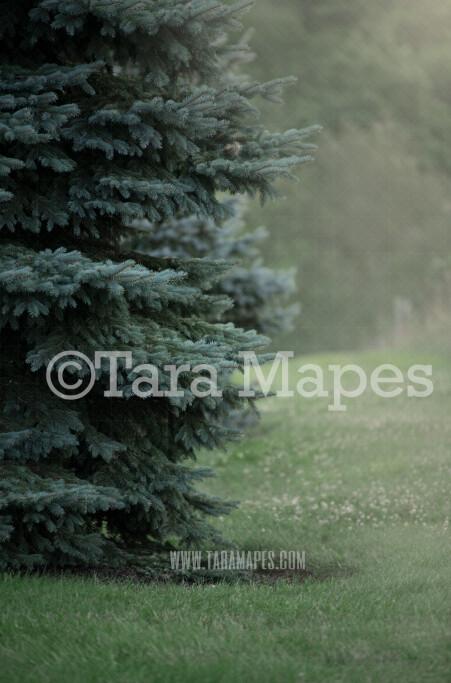 Foggy Pine Digital Background Backdrop