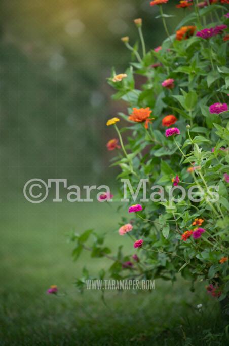 Flowering Bush Digital Background-  Nature Digital Backdrop