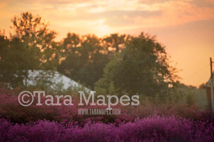 Field of Purple Flowers - Purple Flower Field - Country Field Digital Background-  Nature Digital Backdrop