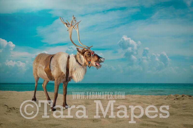 Beach Reindeer on Beach - Warm Christmas - Beach Christmas Holiday Digital Background Backdrop