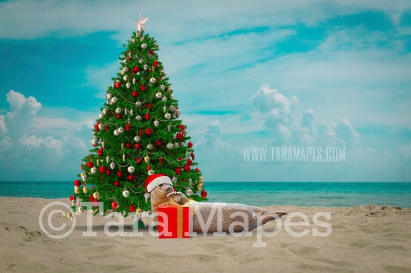 Christmas Seal Pup Digital Background - Christmas Tree on Beach - Christmas Seal on Beach - Summer Christmas Beach - Beach Christmas Holiday Digital Background Backdrop