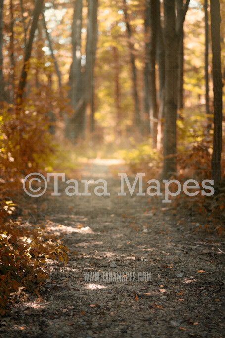 Autumn Scene- Forest Path in Woods - Country Digital Background / Backdrop