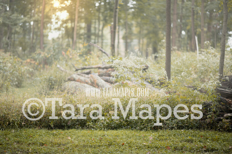 Forest Clearing - Fairy Setting - Natural Digital Background