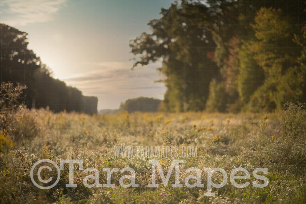 Field of White Flowers -  Flowering Field - Field of Flowers Digital Background / Backdrop