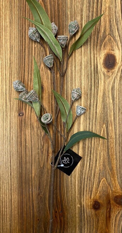 Eucalyptus Pod