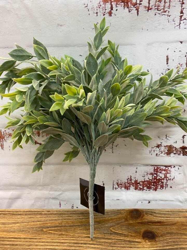 Ruscus Bush Grey Green
