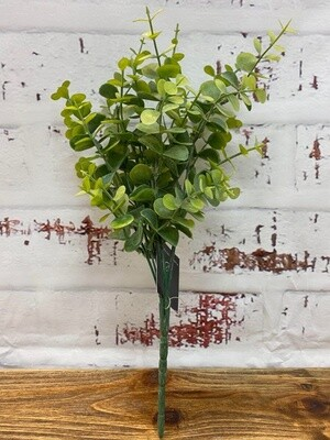 Eucalyptus Bush G/G