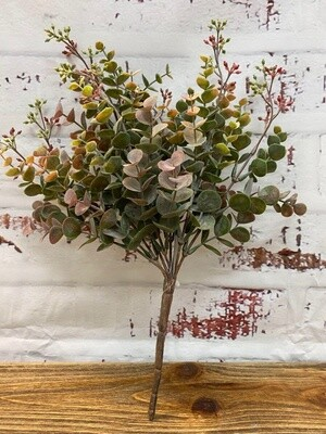 Eucalyptus Bush G/M