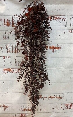Eucalyptus Hanging Bush - Burgundy