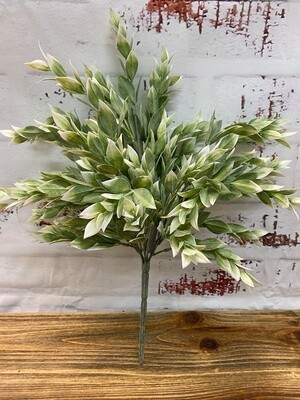 Ruscus Bush Grey White