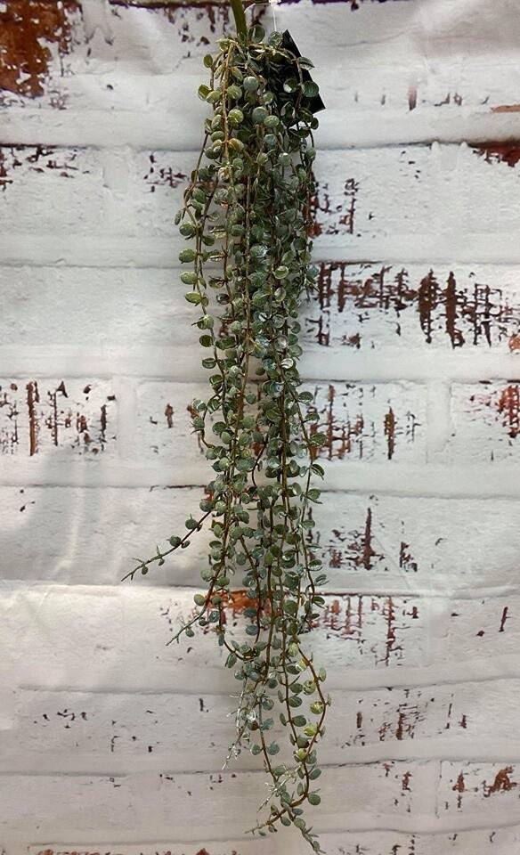 Fern Button Hanging Bush