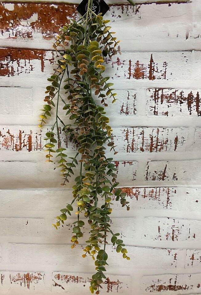 Eucalyptus Hanging Bush-Grey Mauve