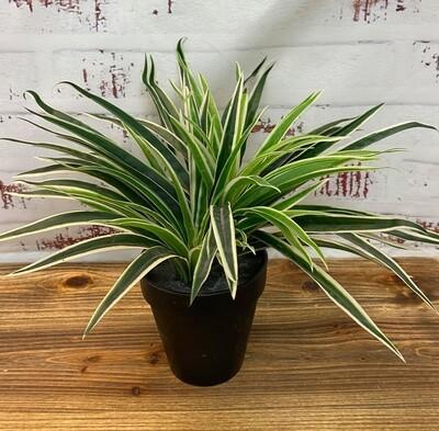 Grass Plant 30cm