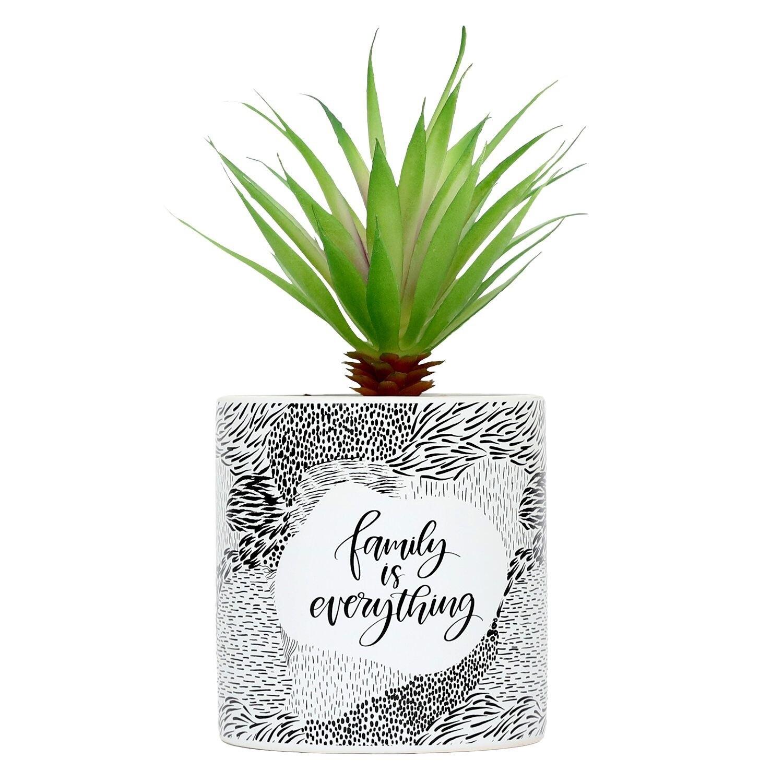 Pot Plant Family