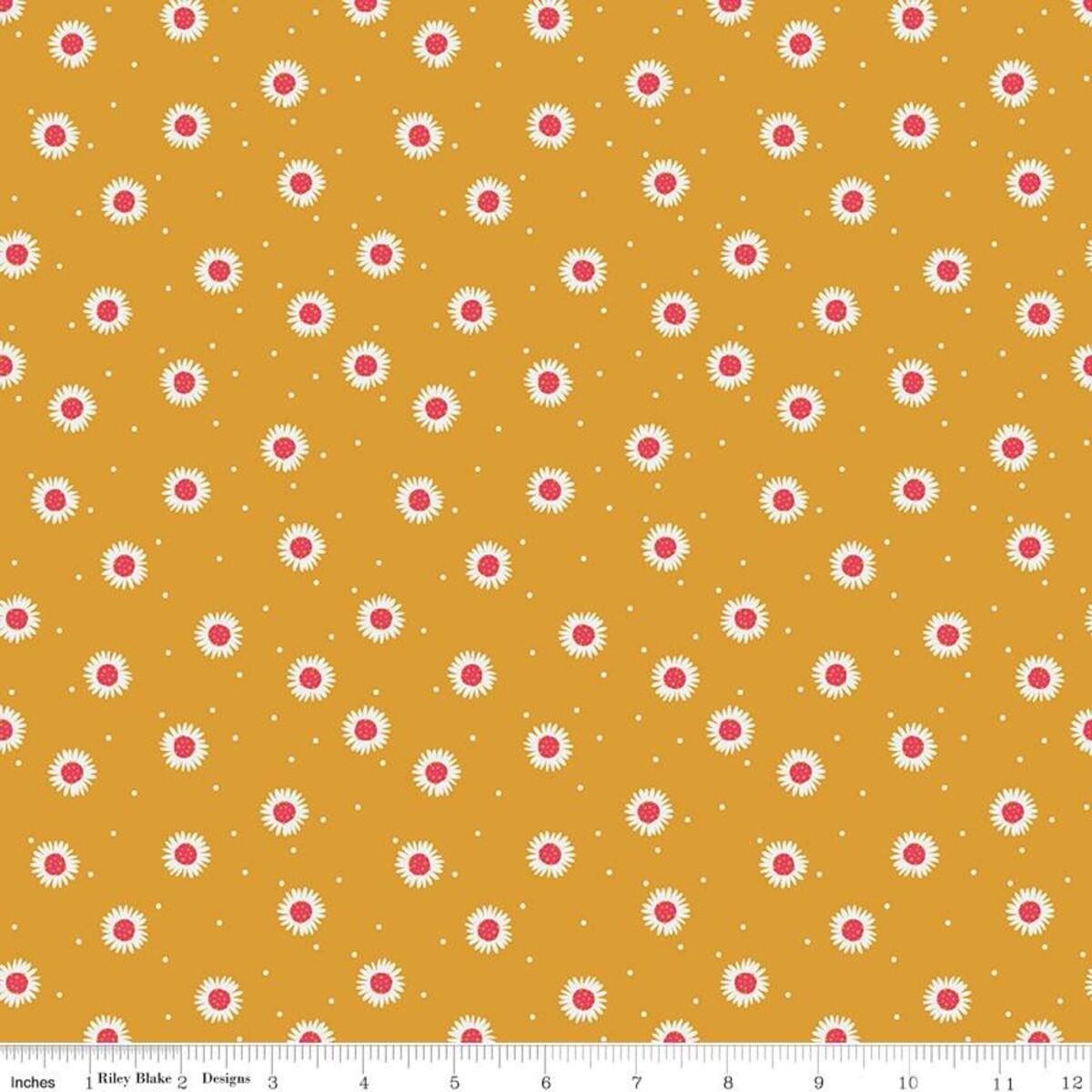Golden Aster - Daisy Mustard