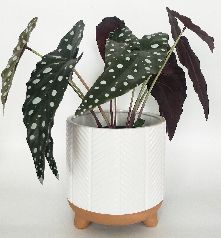 Zari Planter White Lg 18cm