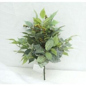 Ficus Fittonia Berry Bush