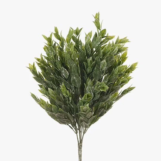 Ruscus Bush - Green White 38cm