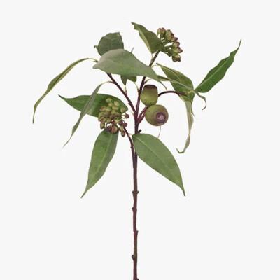 Eucalyptus Pod & Seed 63cm