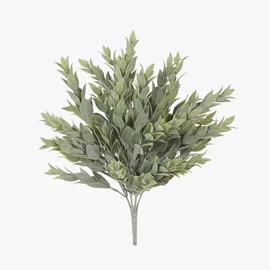 Ruscus Bush - Grey Green 38cm