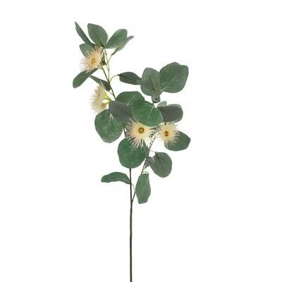 Eucalyptus Flowering Seed