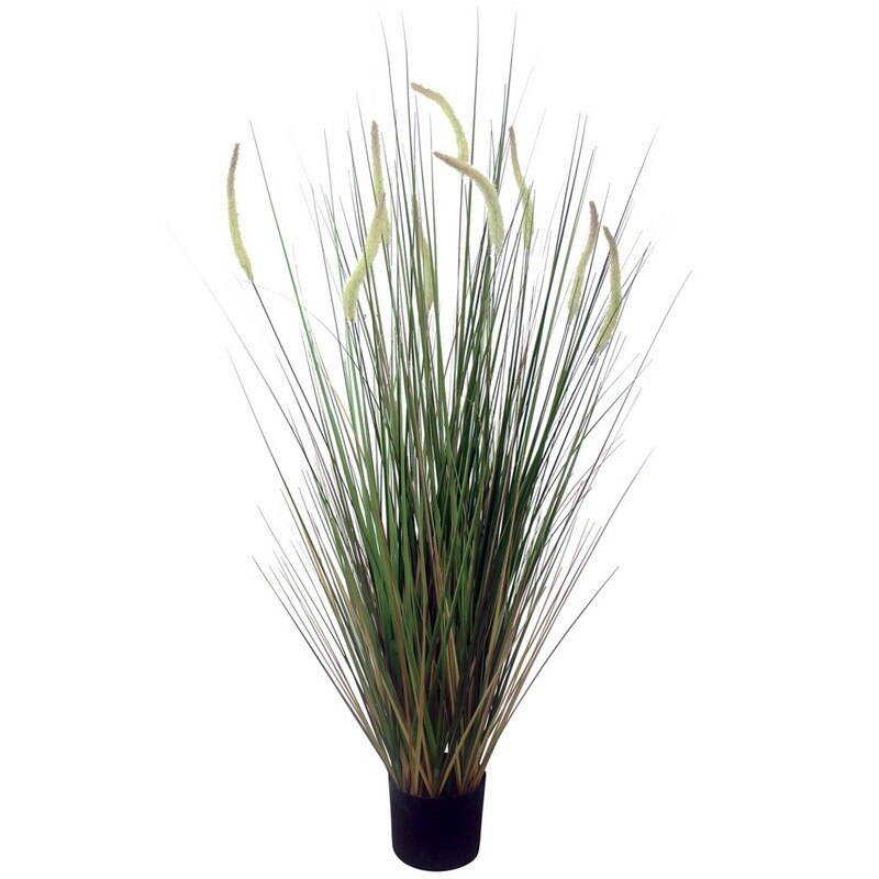 Cats Tail Grass