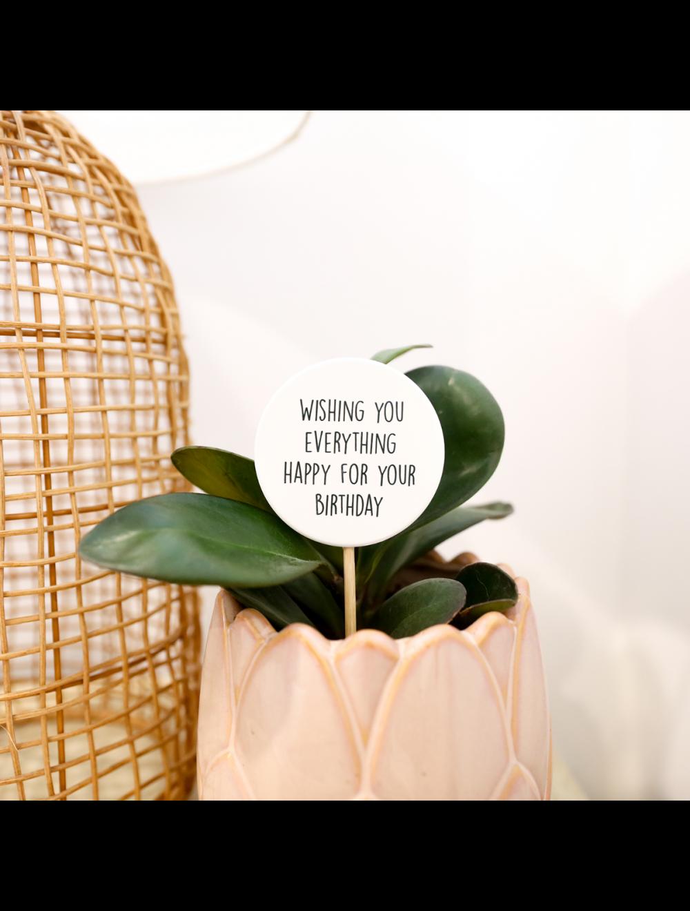 Plant Message Happy Birthday
